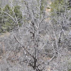 Bryce Canyon - Dag 7 - Foto