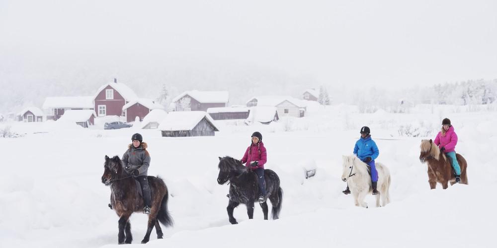 Paarden rijden - Credits Anna Öhlund & imagebank.sweden.se - 2
