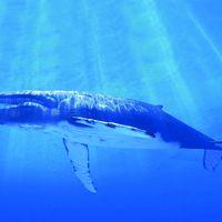 Martijn Tanger - Blue Whale