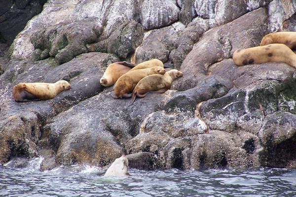 Prince William Sound - Alaska - Doets Reizen