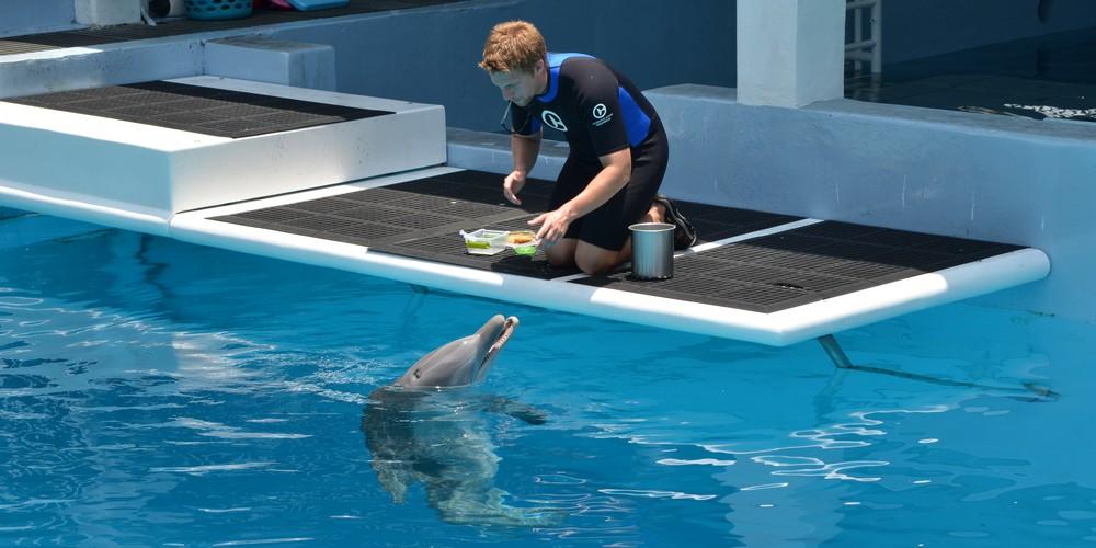 Clearwater Beach Florida  Marine Aquarium