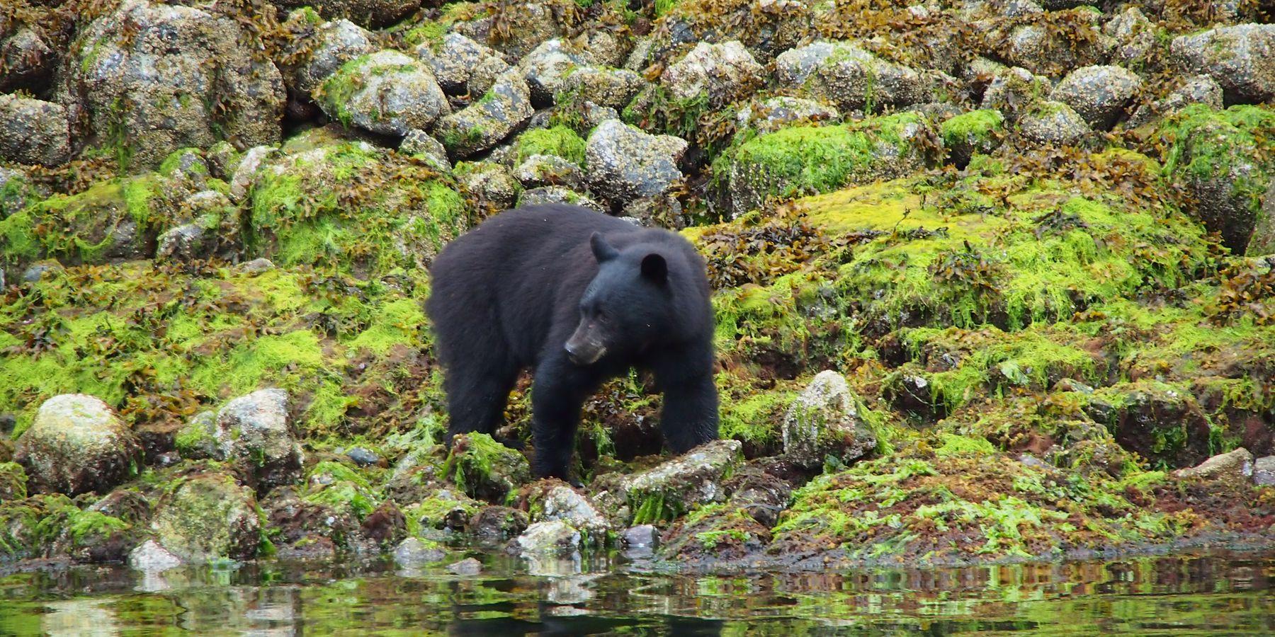 Wildlife Pacific Rim National Park - Vancouver Island - British Columbia - Canada - Doets Reizen