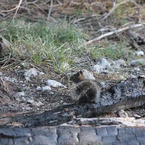 Reisdag 37 15 juni Lassen Volcanic - Dag 37 - Foto