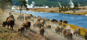 Canada en VS natuurparken; Yellowstone!