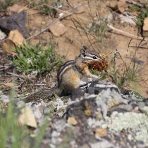 reisdag 26 4 juni Yellowstone park - Dag 26 - Foto