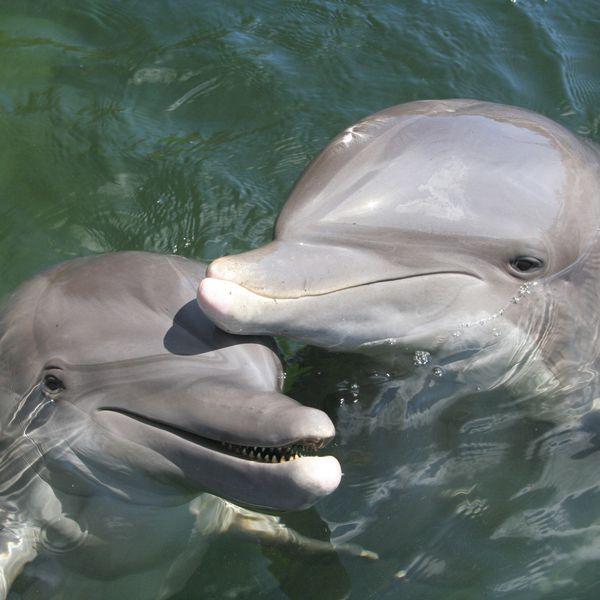 Theater of the Sea - Islamorada - The Keys - Florida - Doets Reizen