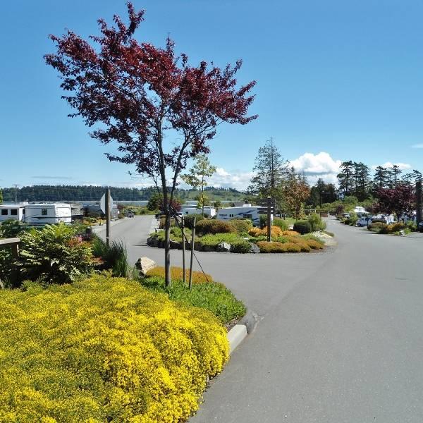 Oceanside RV Resort, sfeerimpressie van de camping