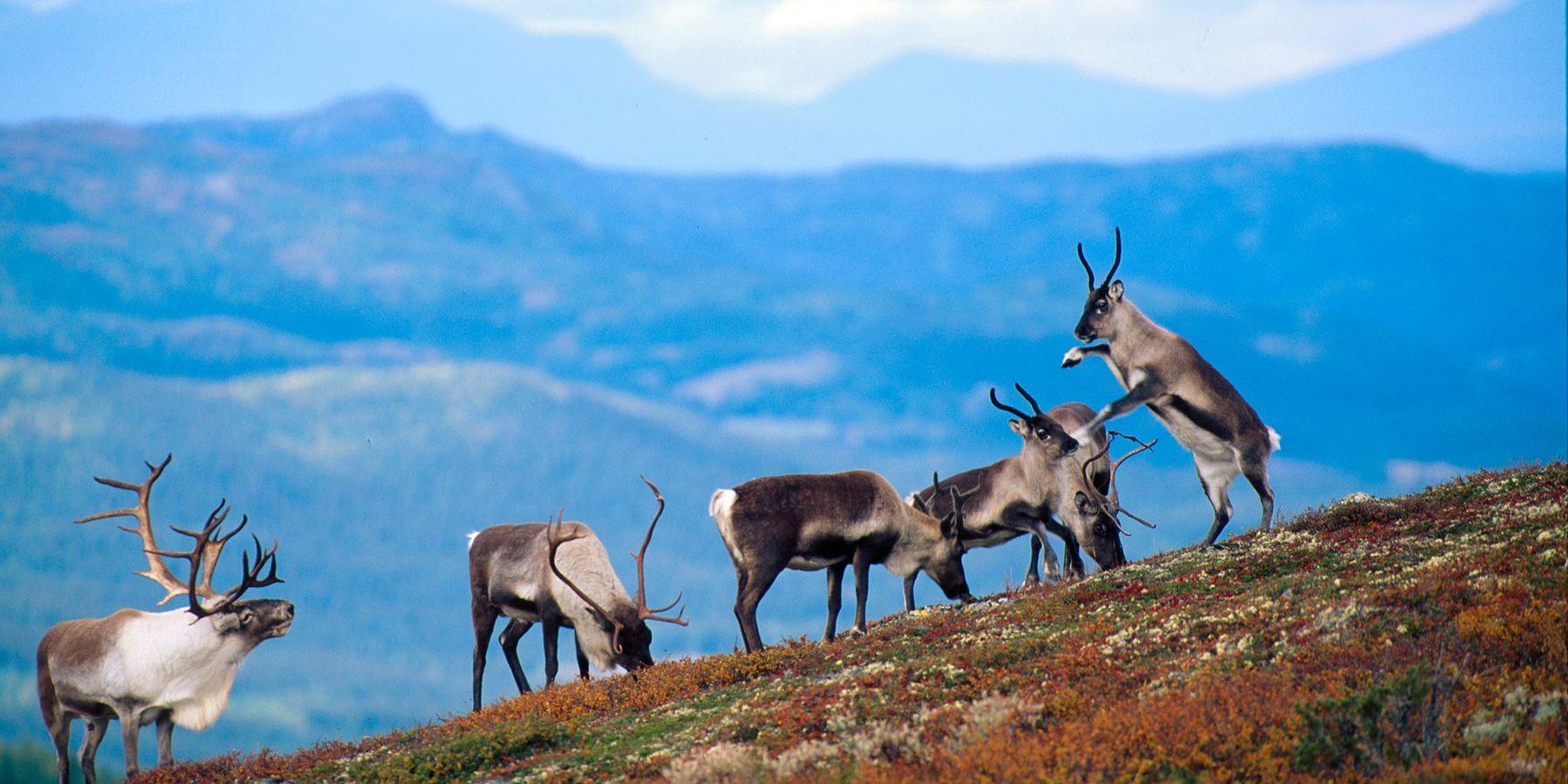 Buskerud - Doets Reizen - Vakantie Noorwegen - Credits VisitNorway
