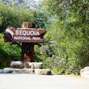 Naar Sequoia - van de woestijn naar de sneeuw! - Dag 14 - Foto