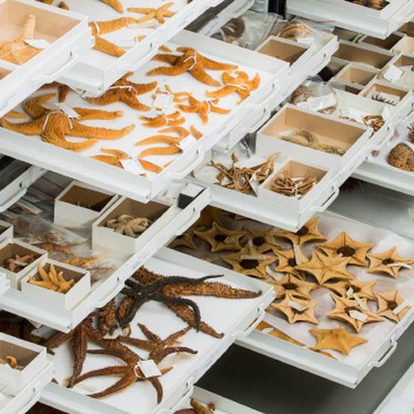 Ottawa Museum of Nature - Ottawa - Ontario - Canada - Doets Reizen