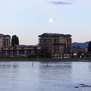 Naar Parksville, de laatste stop op Vancouver Island - Dag 10 - Foto