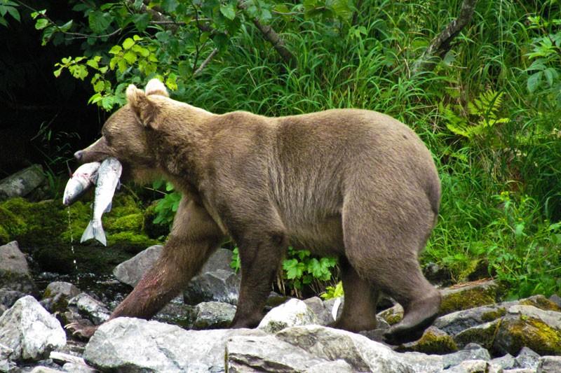 Wildlife Alaska - Doets Reizen