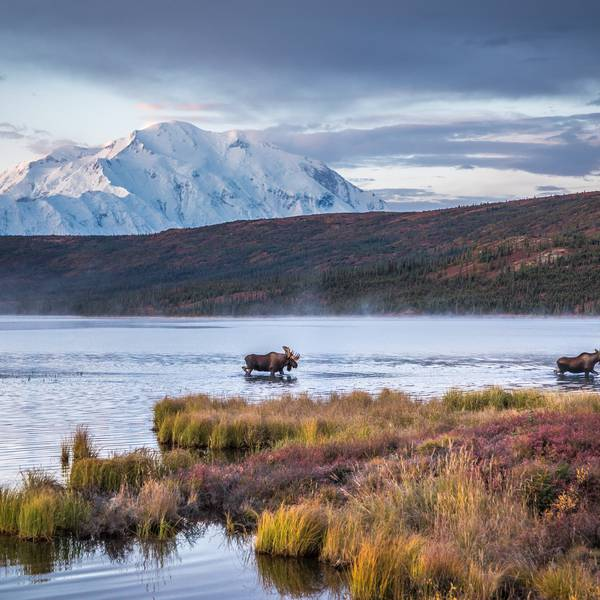 Denali Backcountry Adventure - Denali National Park - Alaska - Doets Reizen