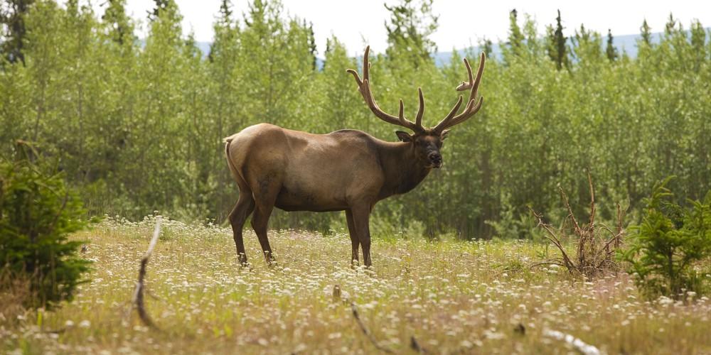 Wildlife Yukon - Canada - Doets Reizen