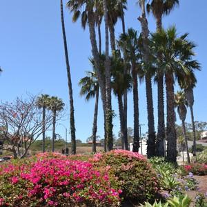 Pismo Beach - LA studio city - Dag 6 - Foto