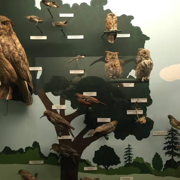 Cape Museum of Fine Arts - Cape Cod - Massachusetts - Doets Reizen
