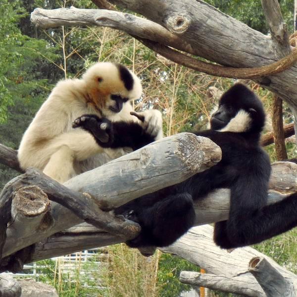 Denver Zoo - Denver - Colorado - Doets Reizen