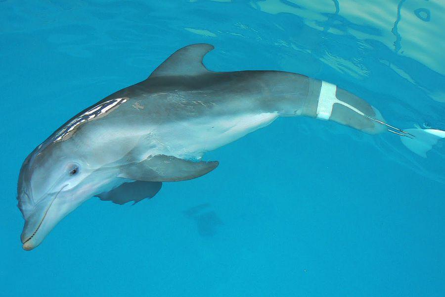 Winter de dolfijn - Marine Aquarium - Clearwater Beach - Florida - Doets Reizen