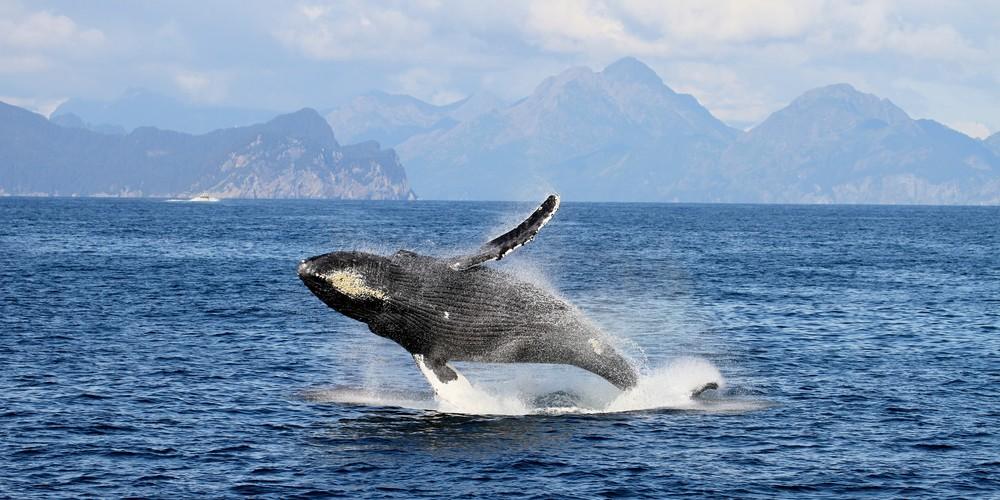 Wildlife - British Columbia - Canada - Doets Reizen