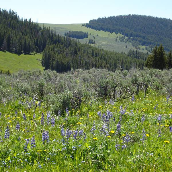 Bighorn National Forest - Wyoming - Doets Reizen