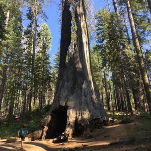 Yosemite park - Dag 22 - Foto