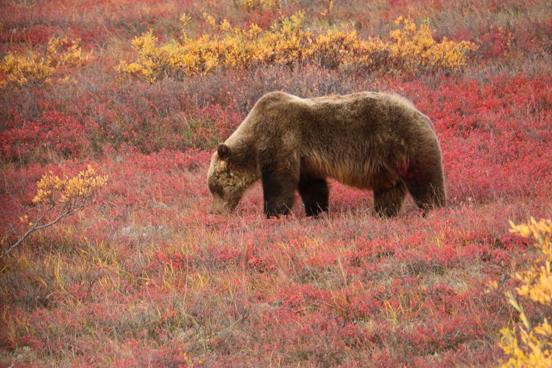 Alaska - Doets Reizen