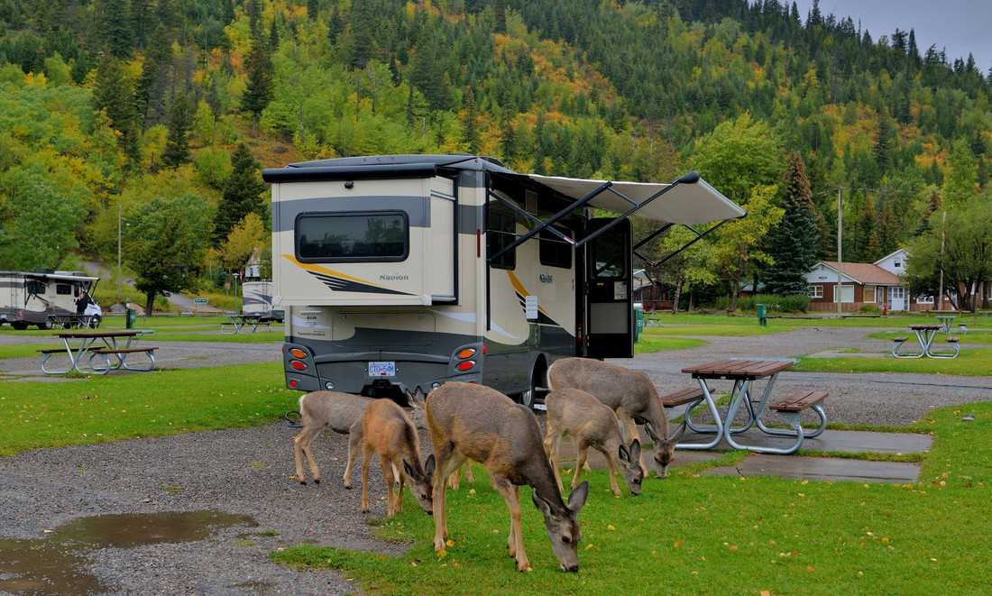 Townsite Campground Waterton N.P.