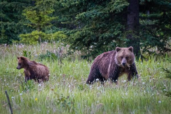 Timberwolf Tours - West-Canada - Doets Reizen