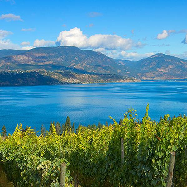 Summerhill Pyramid Winery - Kelowna - Okanagan Valley - British Columbia - Canada - Doets Reizen