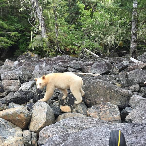 Spirit Bear Lodge - 5