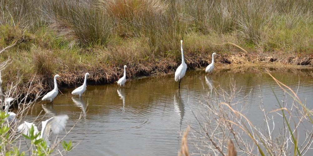 Merrit Island Wildlife Refudge - Space Coast - Florida - Doets Reizen
