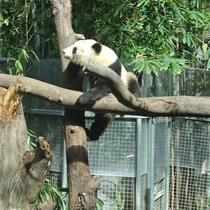 San Diego - San Diego Zoo - Dag 17 - Foto