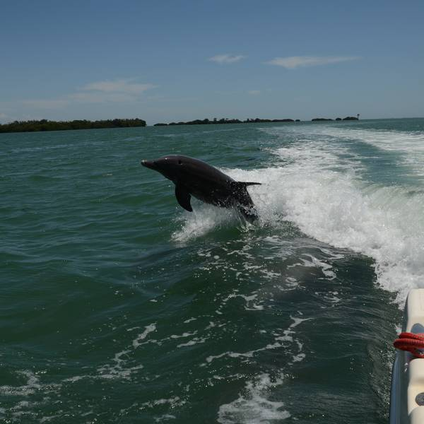 Boottocht Captiva Island - Florida - Doets Reizen