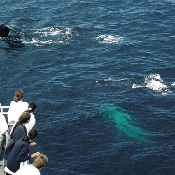 Whalewatch Tadoussac - Quebec - Canada - Doets Reizen