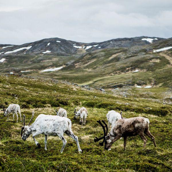 Noordkaap - Doets Reizen - Vakantie Noorwegen - Credits VisitNorway