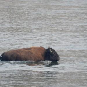 Lake Country in Yellowstone - Dag 14 - Foto
