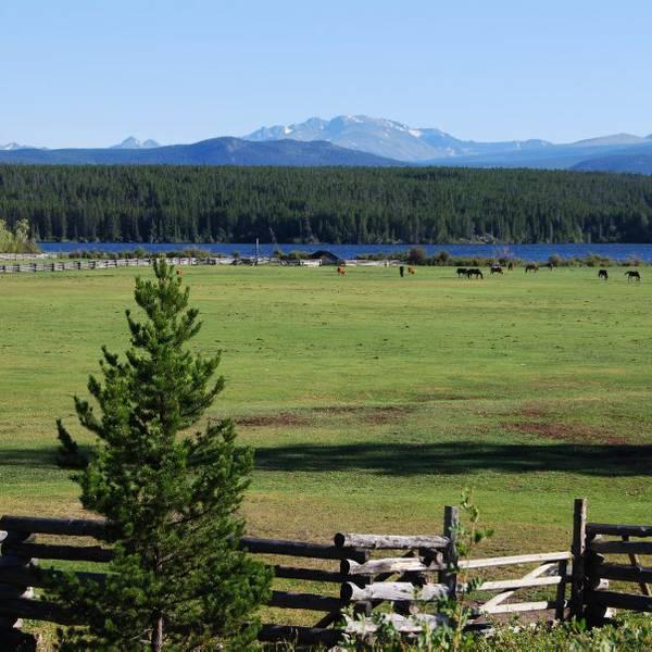 Terra Nostra Guest Ranch - 3