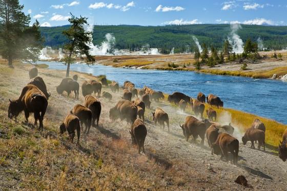 Canada en VS natuurparken; Yellowstone!