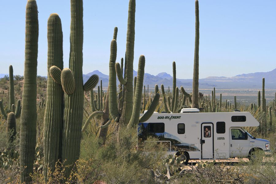 Saguaro National Park - Arizona - Doets Reizen