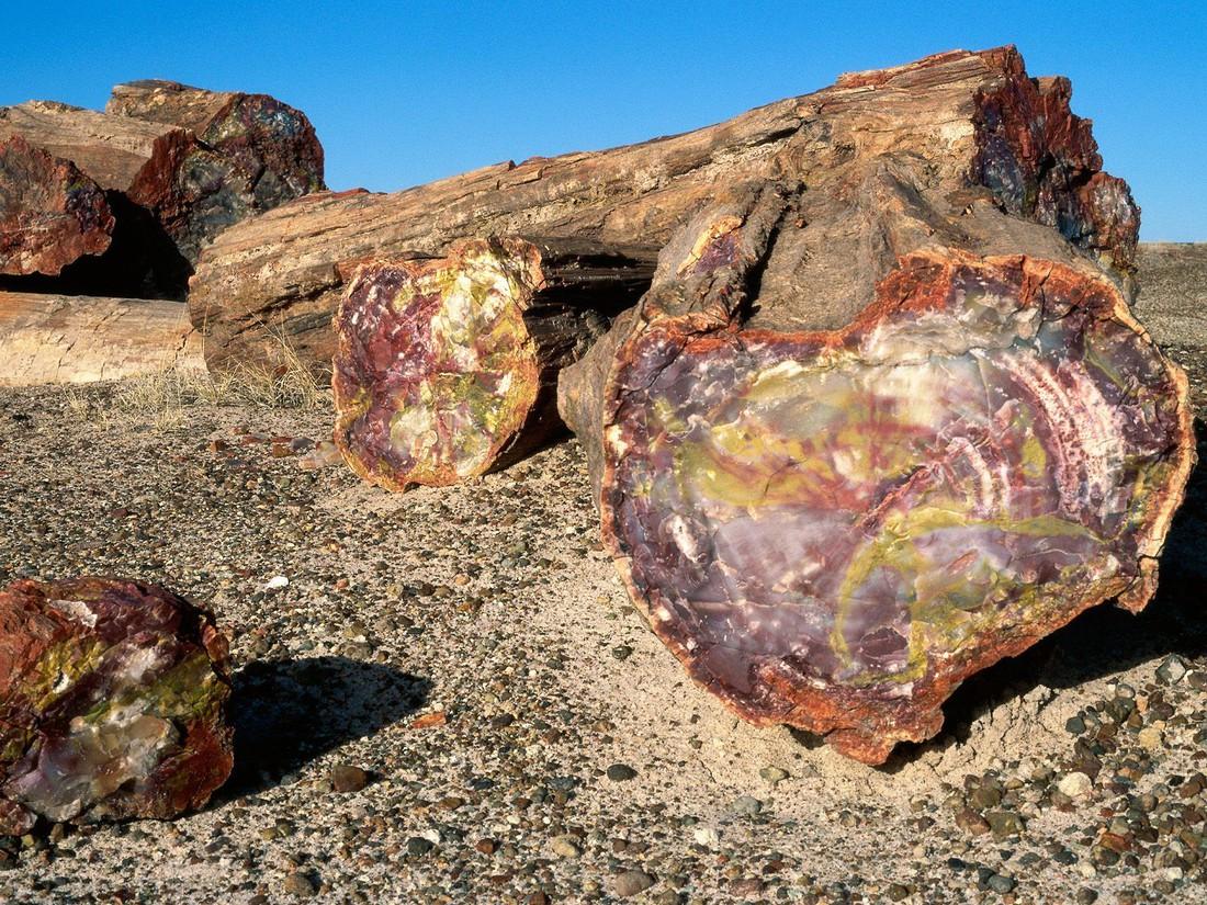 Petrfied Forest - Arizona - Doets Reizen