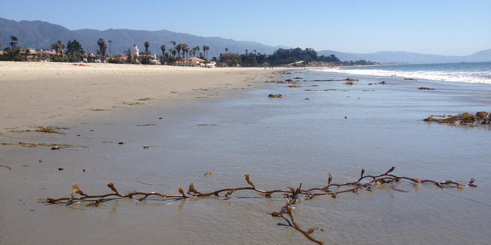 zeewier op East Beach Santa Barbara California