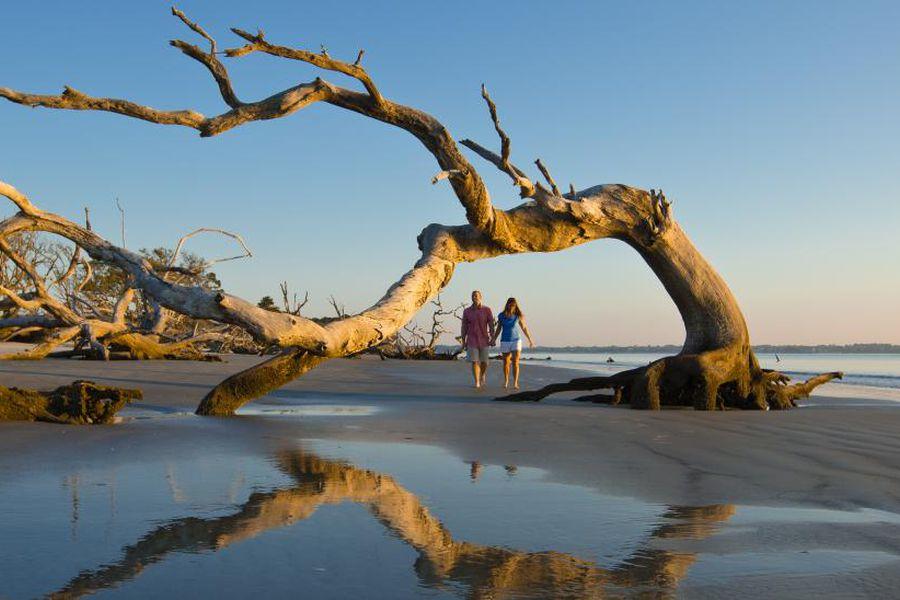 Coastal driftwood - Georgia - Amerika -Doets Reizen