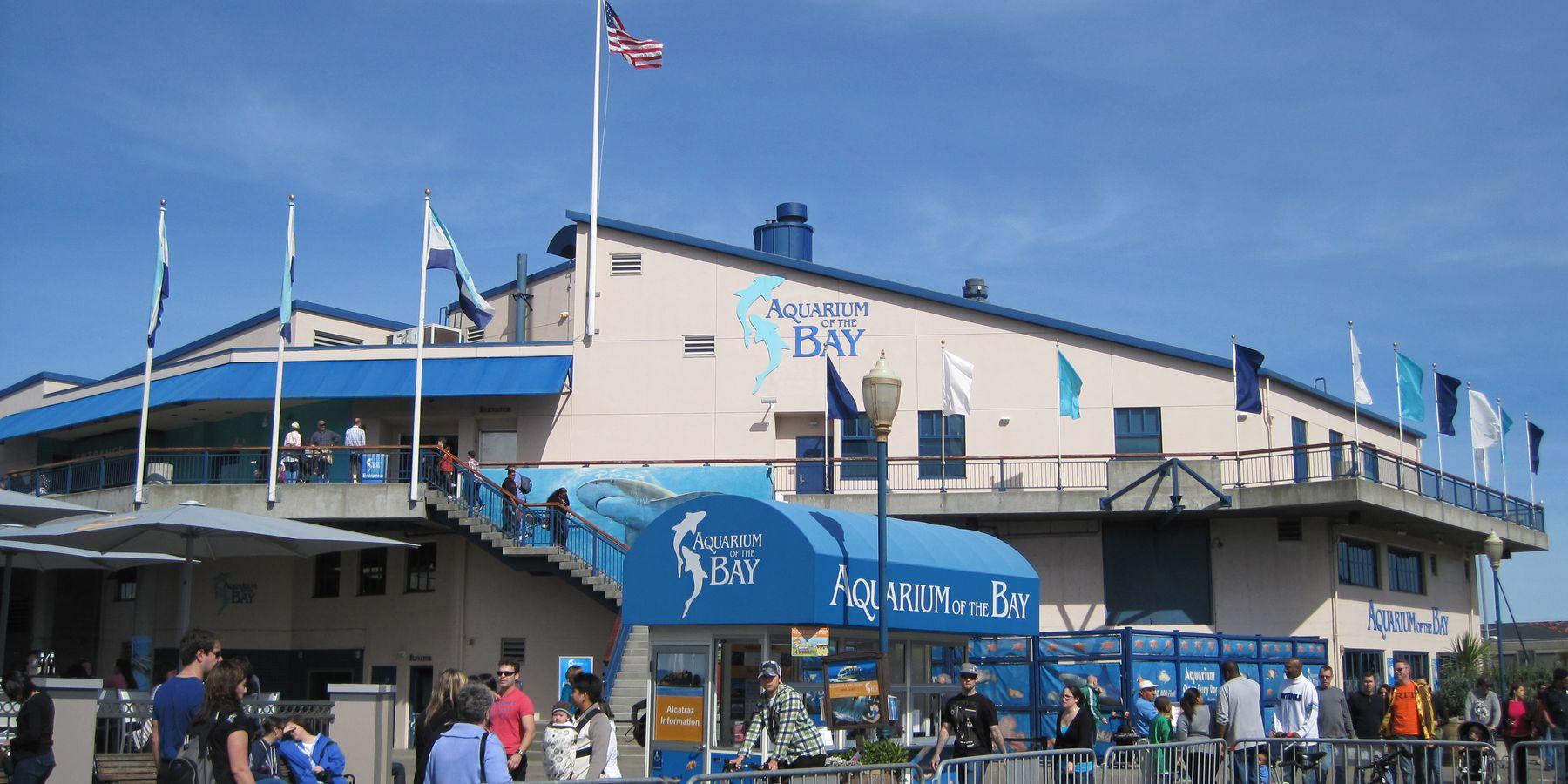 Aquarium of the Bay - San Francisco - California - Amerika - Doets Reizen