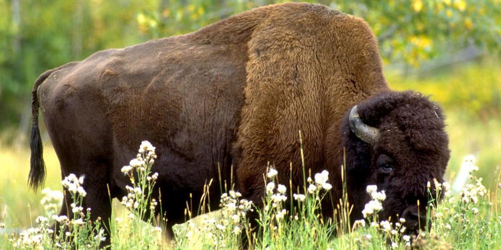 Banff Wildlife - Alberta - Canada - Doets Reizen