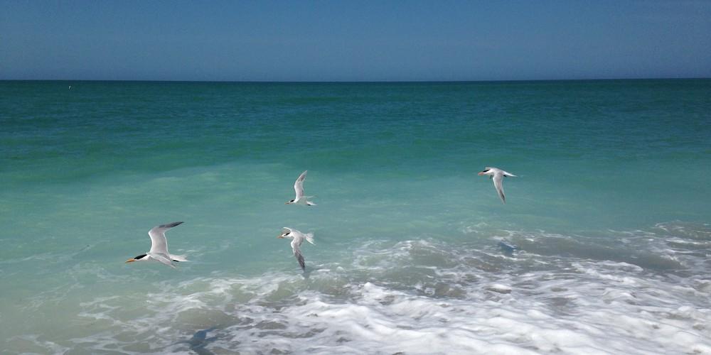 South Seas Resort - Captiva Island - Florida - Doets Reizen