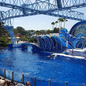 Seaworld!! - Dag 10 - Foto
