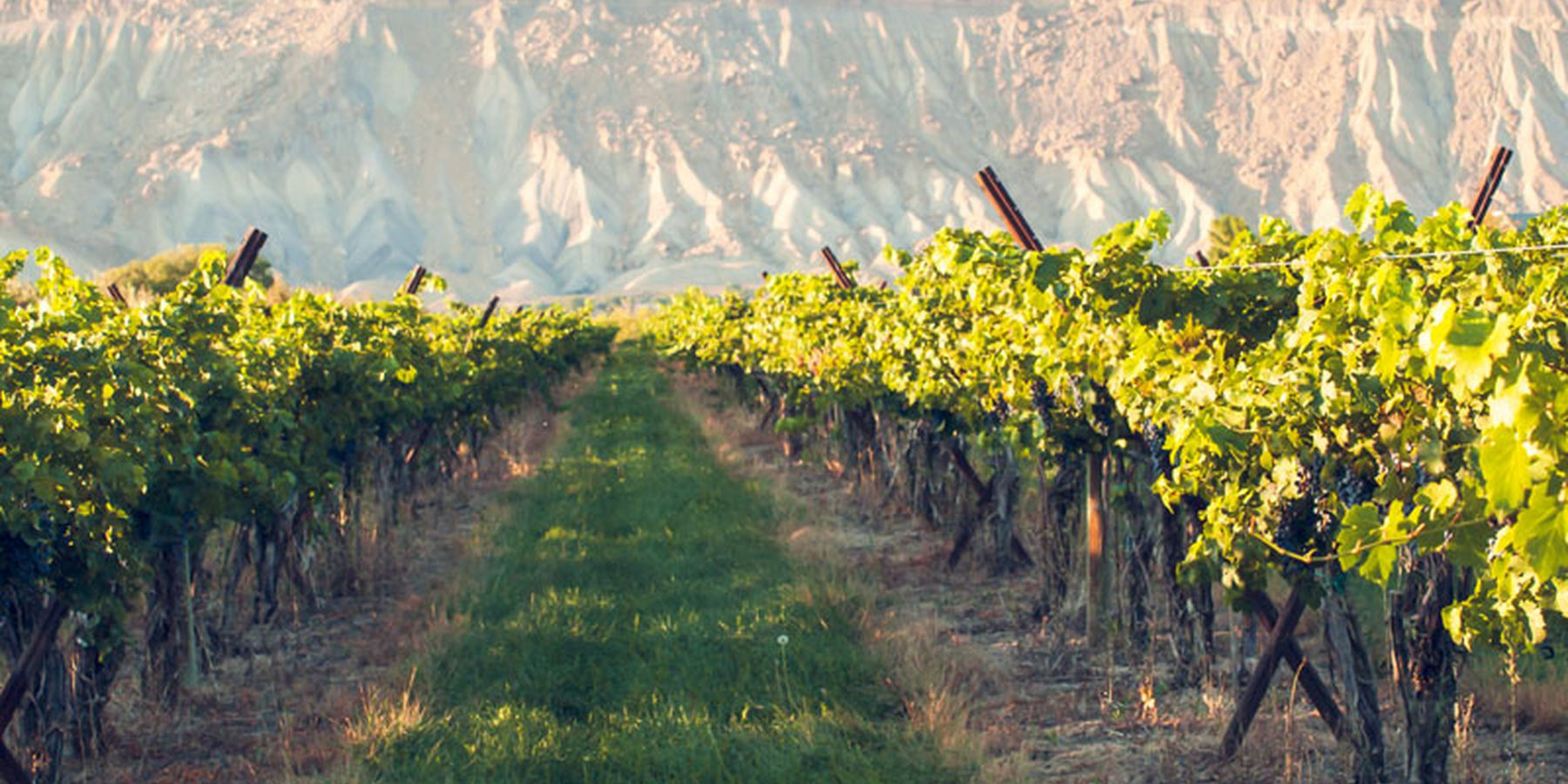 Colorado's Wine Country - Colorado - Doets Reizen