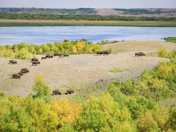 Buffalo Pound National Park - Saskatchewan - Canada - Doets Reizen