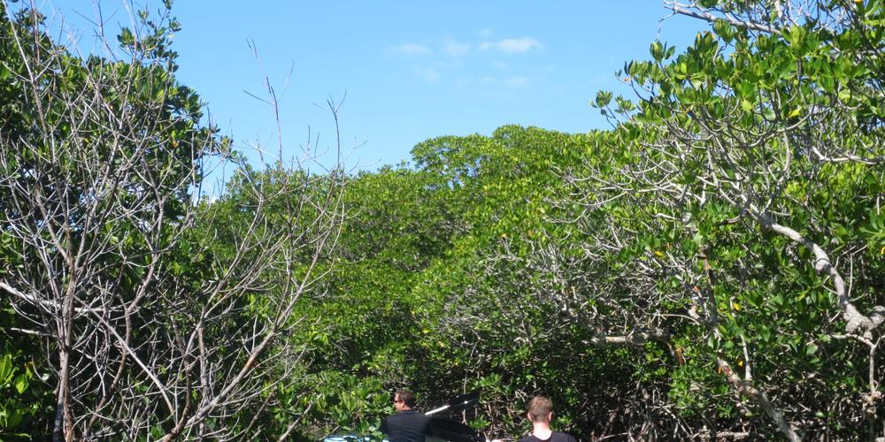 Kajakken Florida Keys