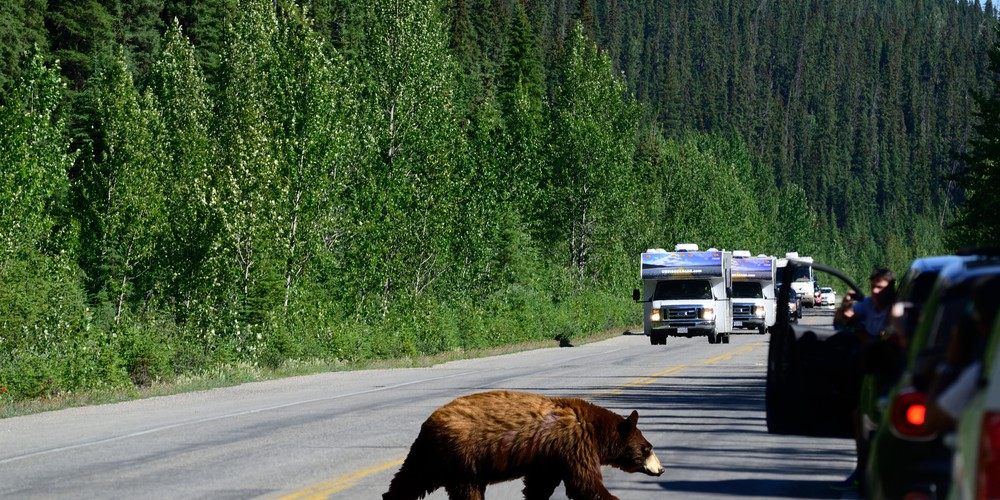 Cruise Canada Icefields Parkway Alberta